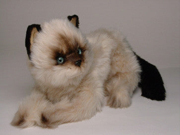 """Monkey"" Colorpointe Persian Ragdoll"