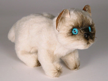 """Mr. Jinx"" Colorpointe Persian Ragdoll"