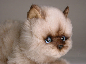 """Octavia"" Seal Point Himalayan"