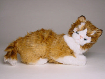 """Cosey"" Maine Coon"