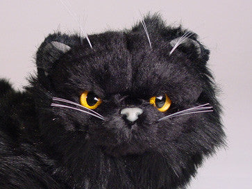 """Peter"" Black Persian"