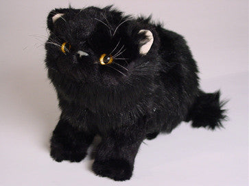 """Lucky"" Black Persian"