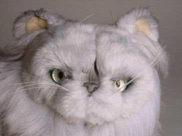 """Chinnie"" Silver Persian"