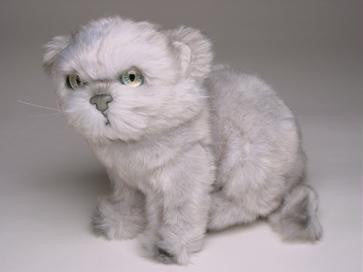"""Tiffany"" Silver Persian"
