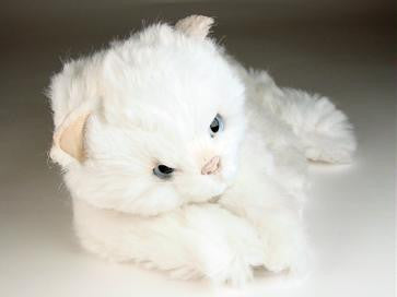 """Bass"" White Cat"