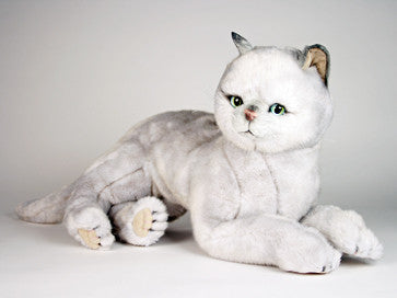 """Arlene"" British Shorthair"