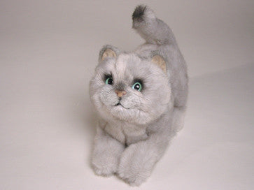 """Chessie"" British Shorthair"