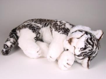 """Nirvana"" White Siberian Tiger"