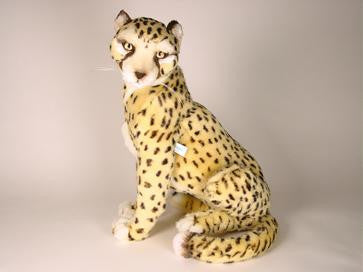 """Chester"" Cheetah"