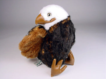 """Freedom"" Bald Eagle"