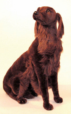 """Red"" Irish setter"