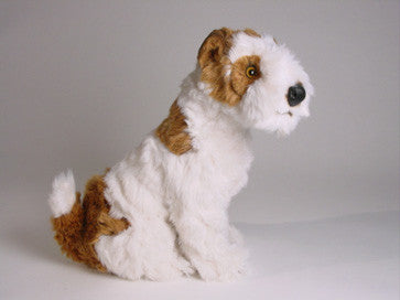 """Snowy"" Wire Fox Terrier"