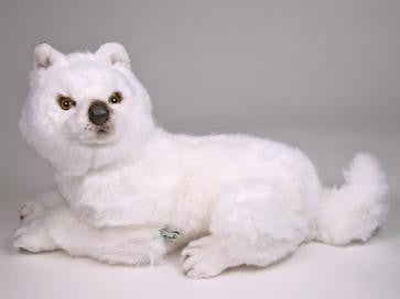 """Suggen"" Samoyed"