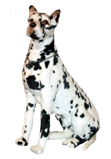 """Longfellow"" Great Dane Harlequin"