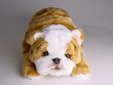 """Meatball"" Bulldog"