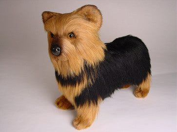 """Smoky"" Yorkshire Terrier"