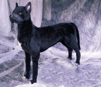 """Rumba"" Great Dane"