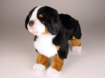 """Julia"" Bernese Mountain Dog"