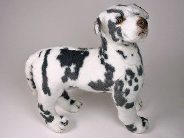 """Pepper"" Harlequin Great Dane"