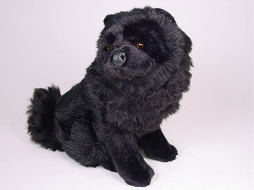 """Maxwell"" Chow Chow"