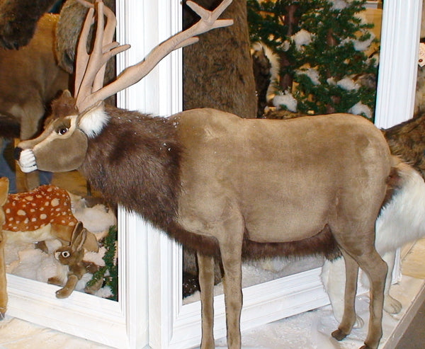 """Rafferty"" Reindeer (right)"