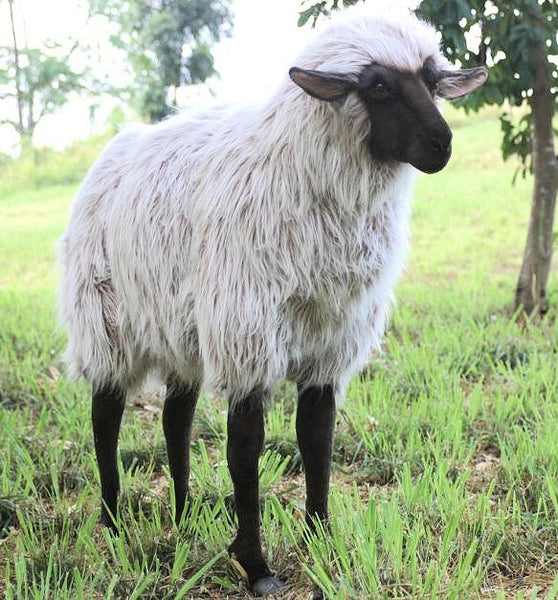 """Lady Ba Ba"" Sheep"