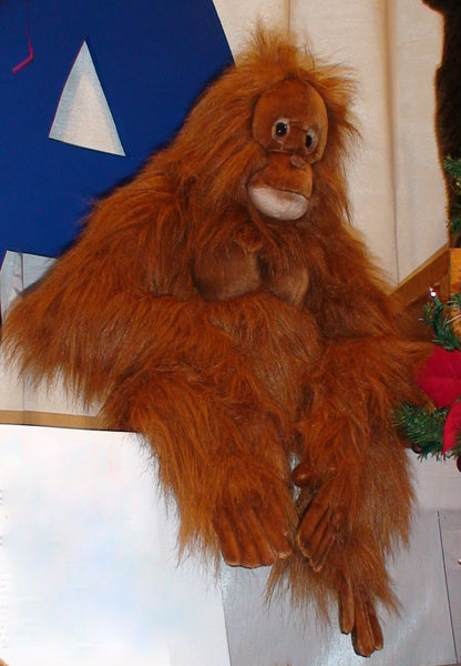 """Hairy Houdini"" Orangutan Kid"
