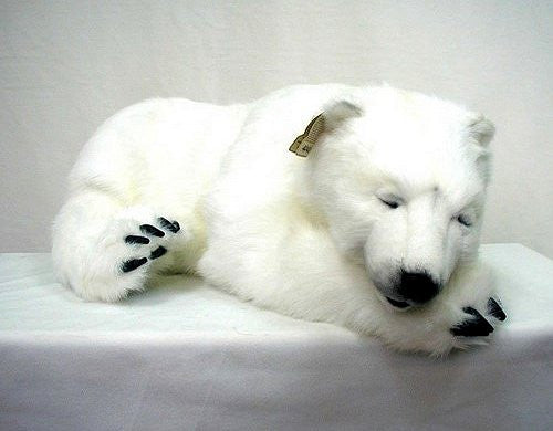 """Peppy"" Polar Bear"