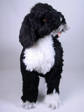 """Beau"" Portuguese Water Dog"
