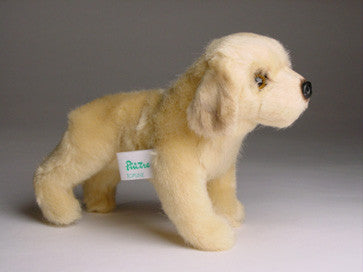 """Bojangles"" Golden Retriever"