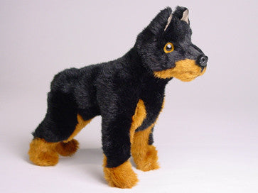 """Bolt"" Doberman Pinscher"
