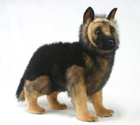 """Brett"" German Shepherd"