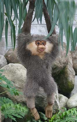 """Quinti"" Long Armed Gibbon"