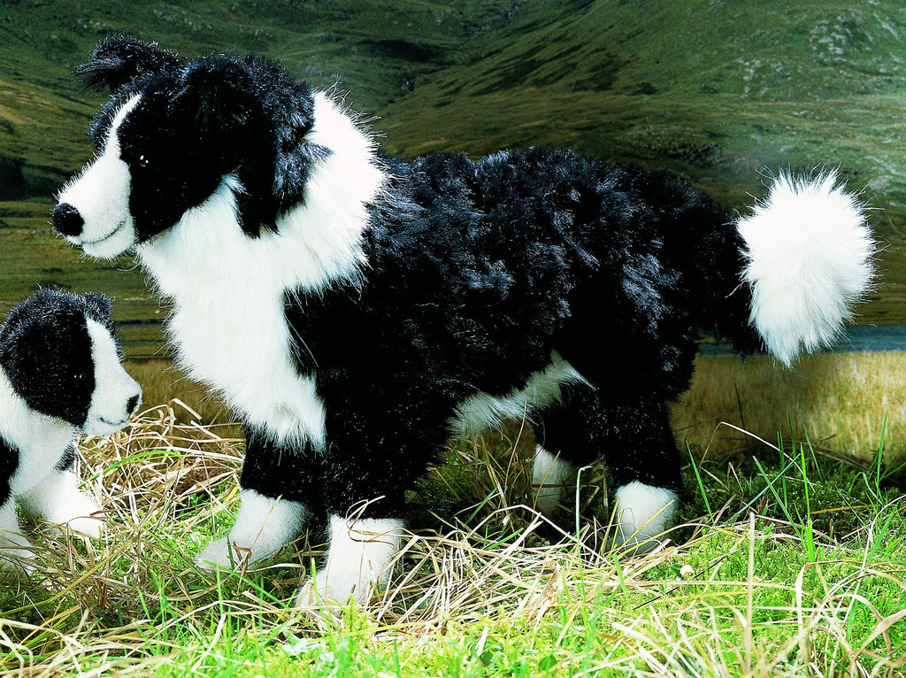 """Mary"" Border Collie"