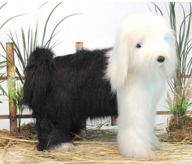 """Frisco"" Old English Sheepdog"