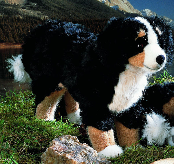 """Roman"" Bernese Mountain Dog"