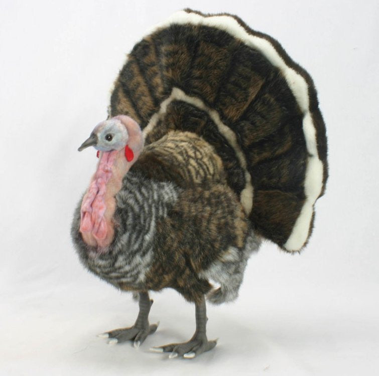 """Mr. Gobbles"" Turkey"