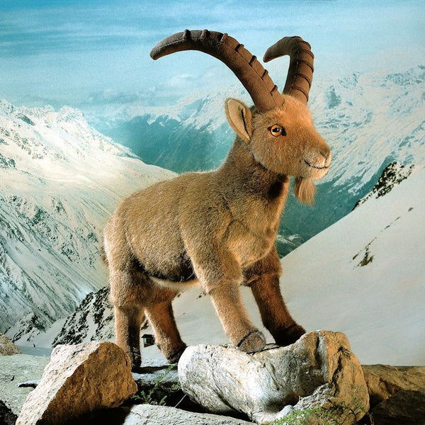 """Louis"" Ibex Mountain Goat"