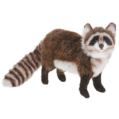 """Zorro"" Raccoon"