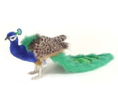"""Tippy"" Peacock"