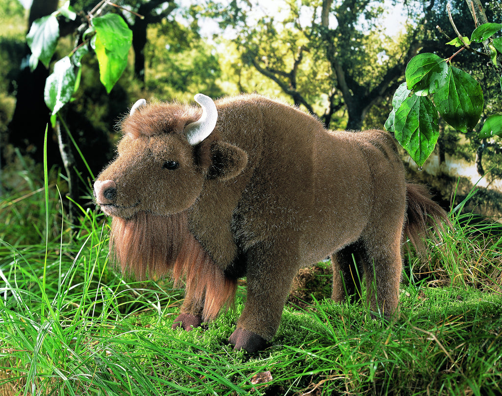 """Bonni"" Buffalo Bison"