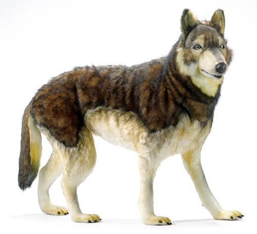 """Minnesota"" Timber Wolf"