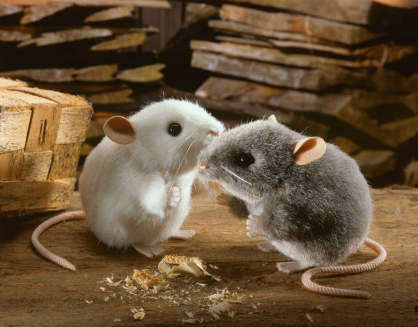 """Pieps"" White  Mouse"