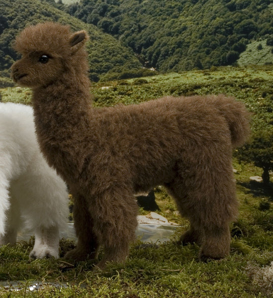 """Berk"" Brown Alpaca"