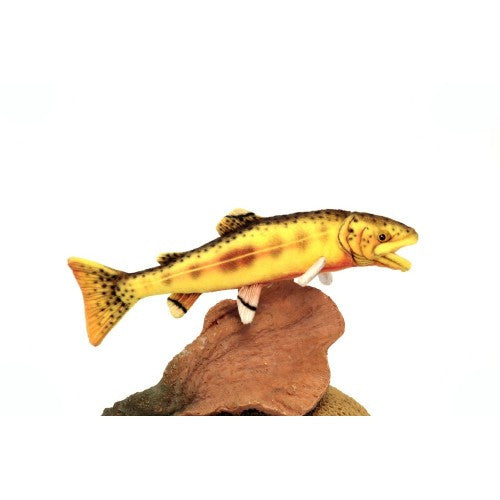 """Travis"" Golden Trout"