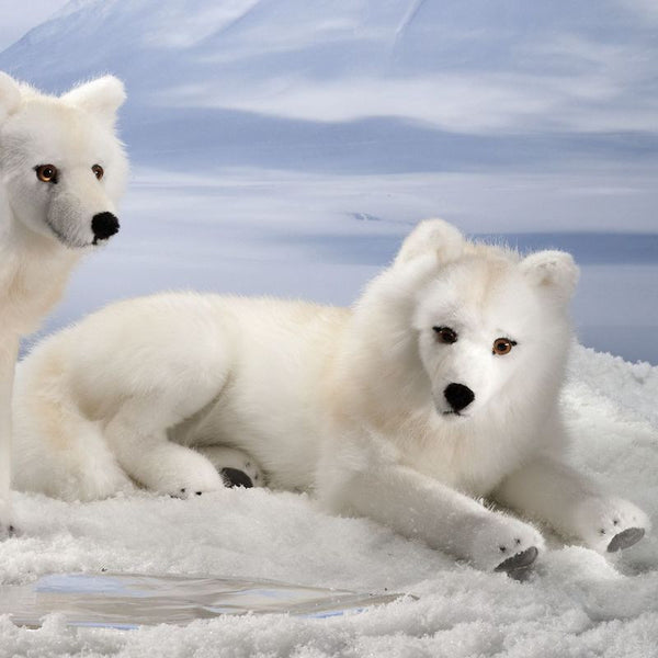 """Journey"" Arctic Wolf"
