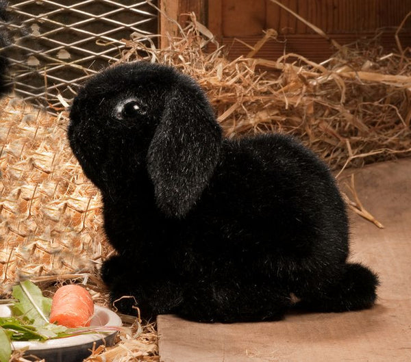 """Skipper"" Dwarf Lop Eared Bunny Rabbit, Black"