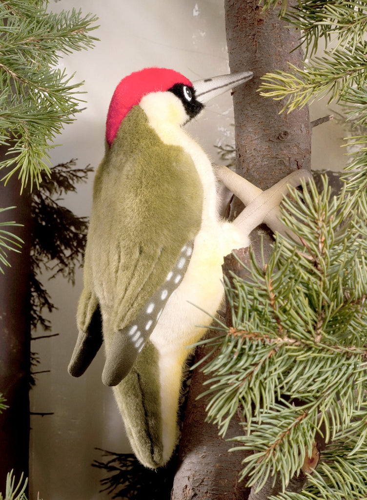 """Oakley"" Eurasian Green Woodpecker"