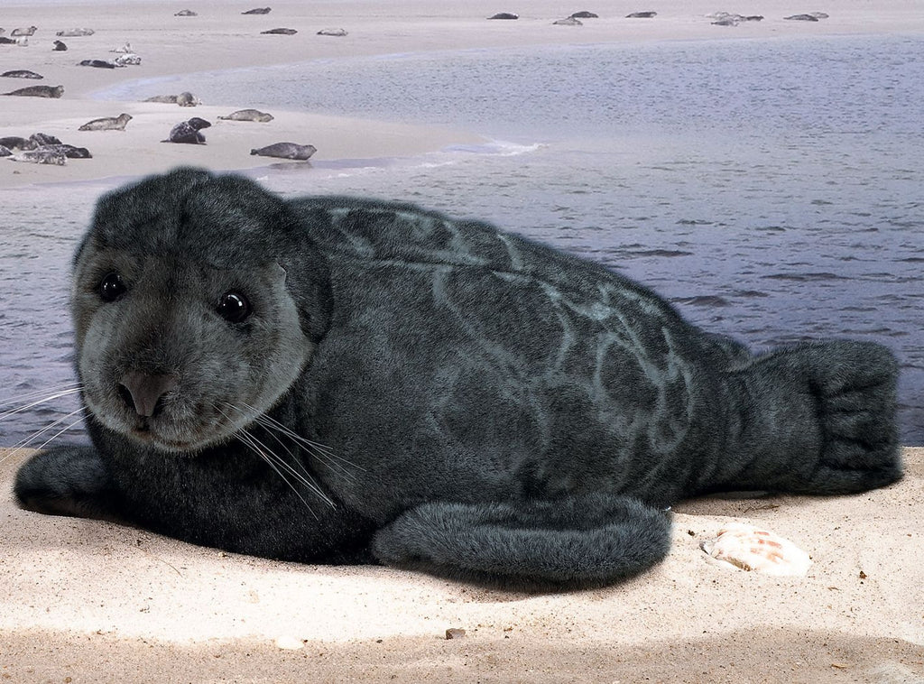 """Patches"" Ringed Seal"