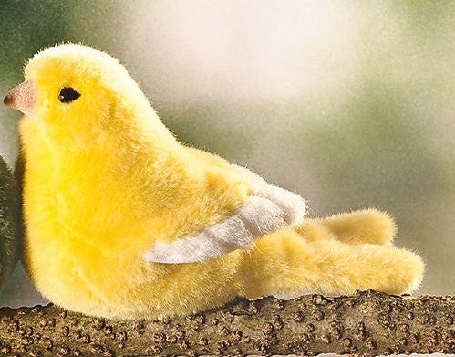 """Ozzie"" Yellow Canary"
